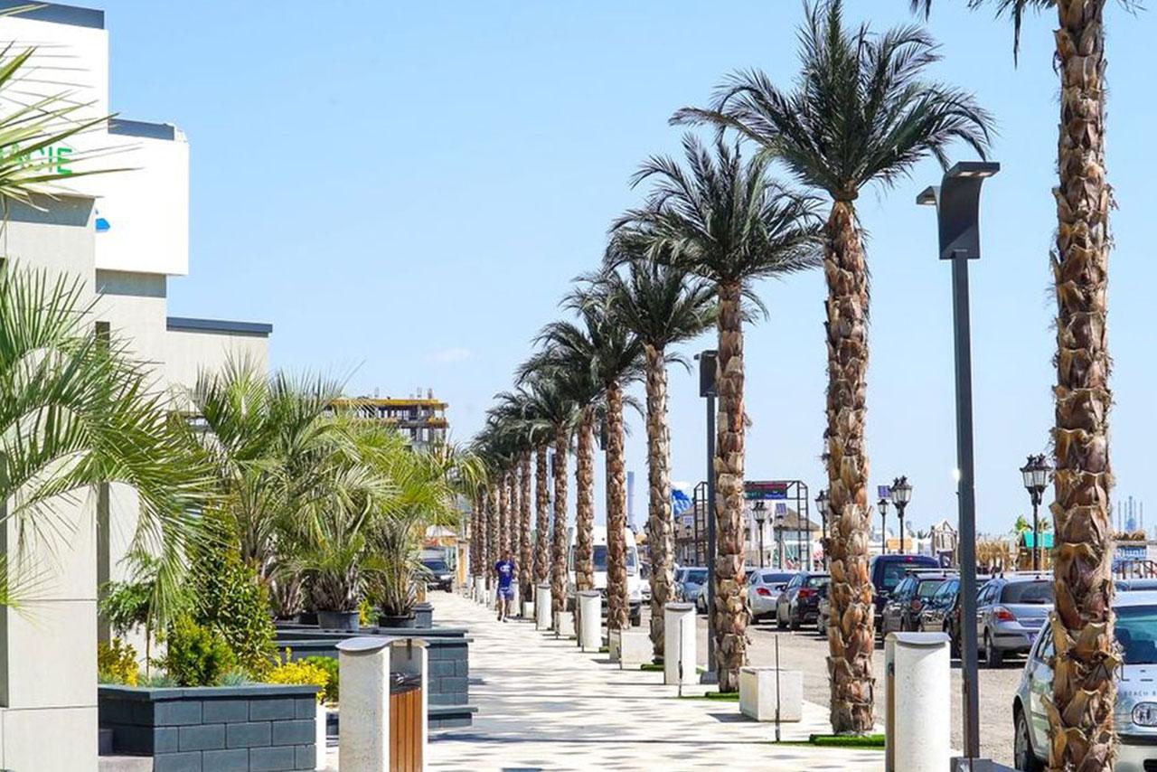 Alezii Beach Resort Mamaia